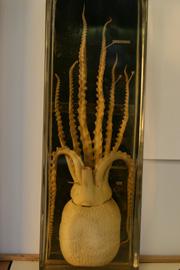 breath octopus