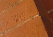 cb catprints