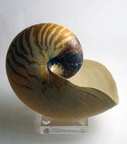 cb nautilus
