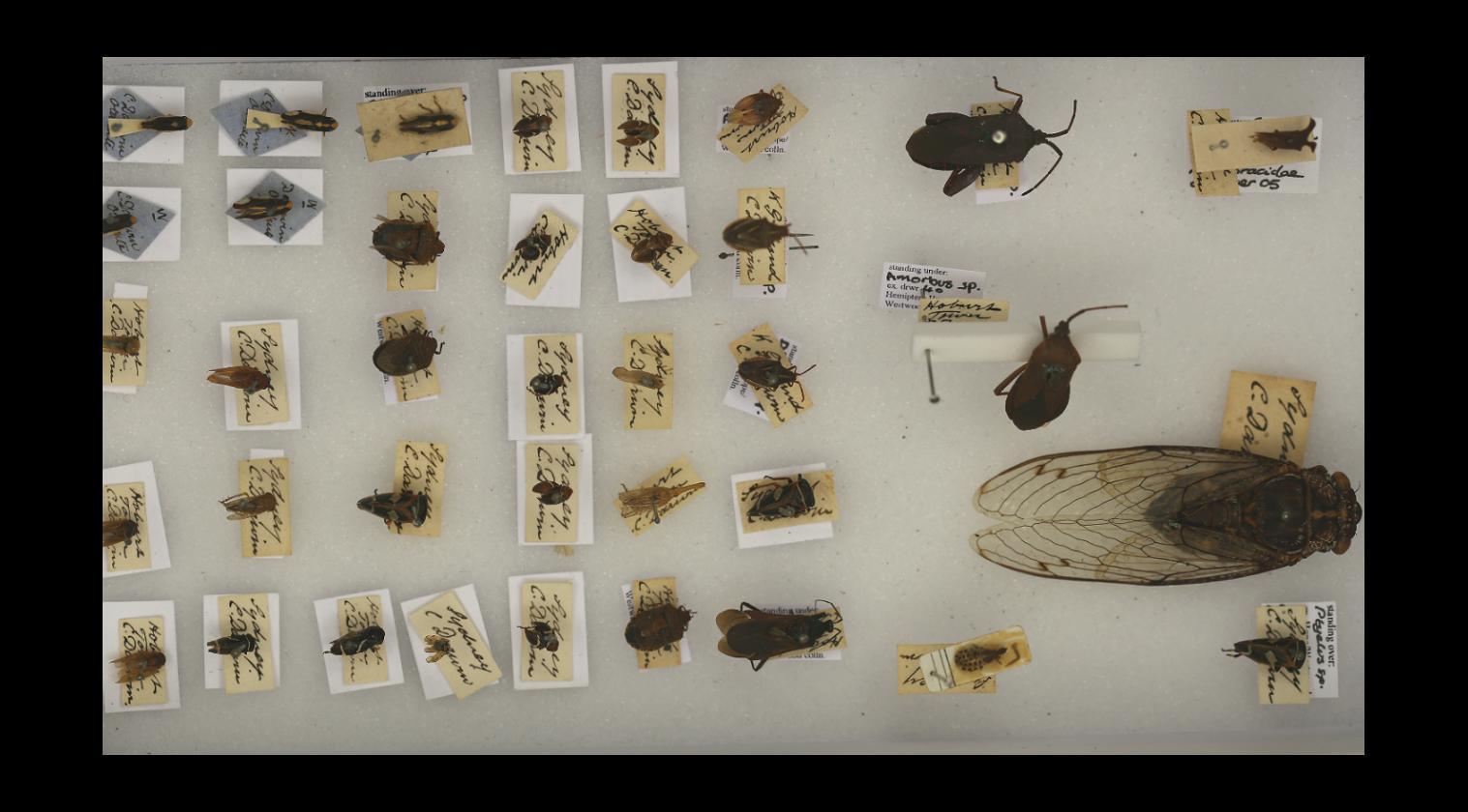 Darwins specimens