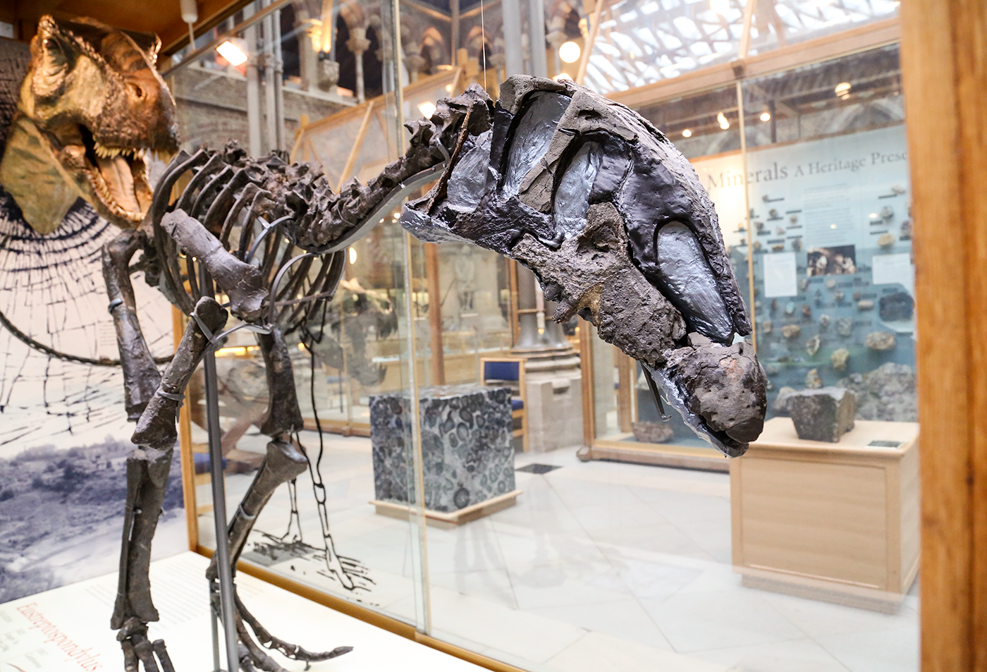 The Oxfordshire Dinosaurs | Oxford University Museum of