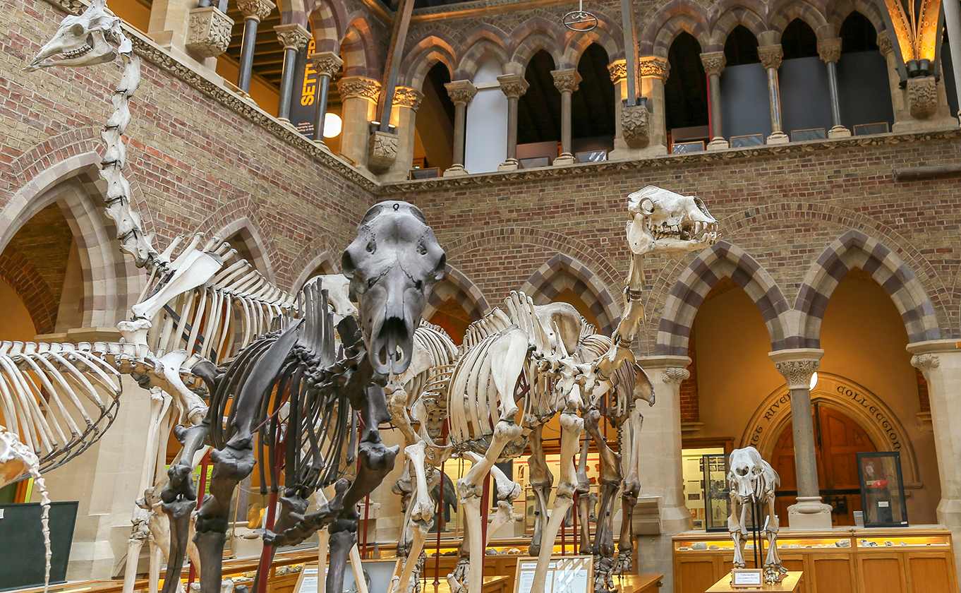 Skeleton parade | Oxford University Museum of Natural History | 1362 x 840 jpeg 1288kB