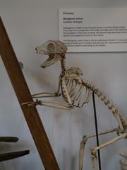 mad lemur