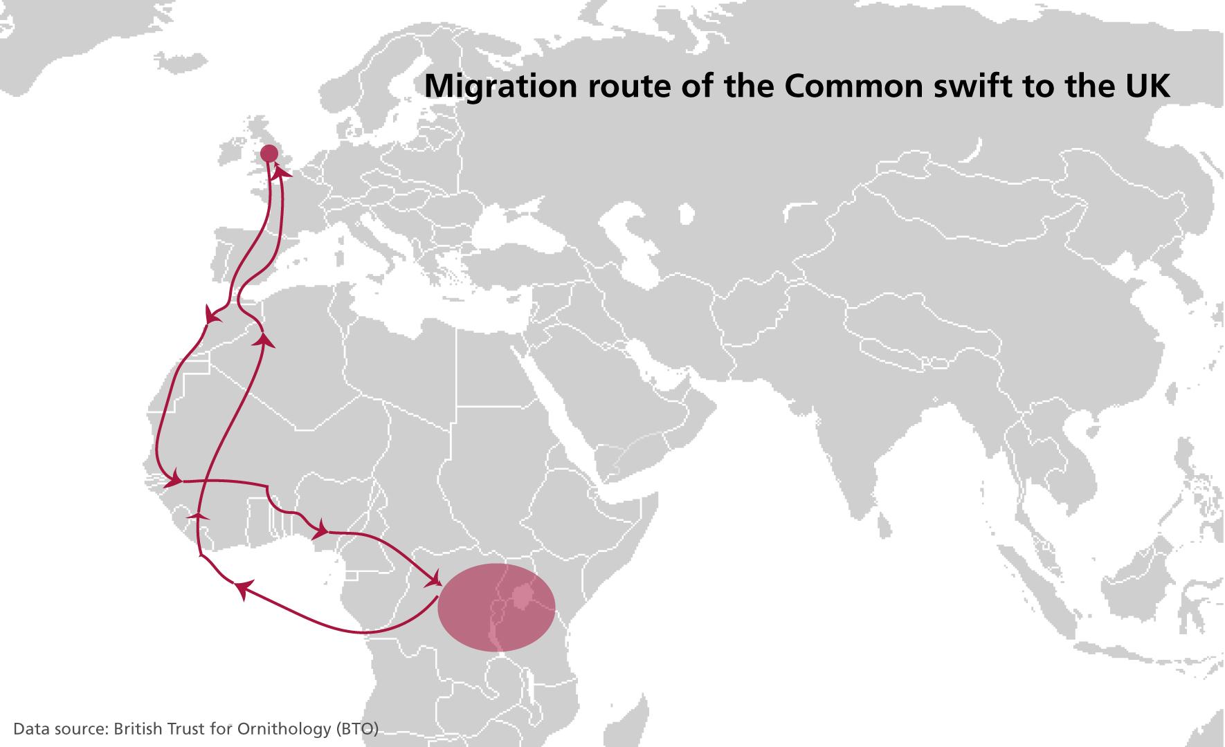 migration swift