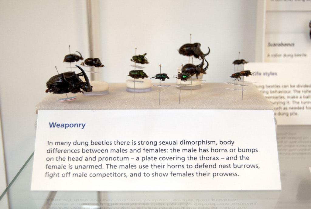 weaponry