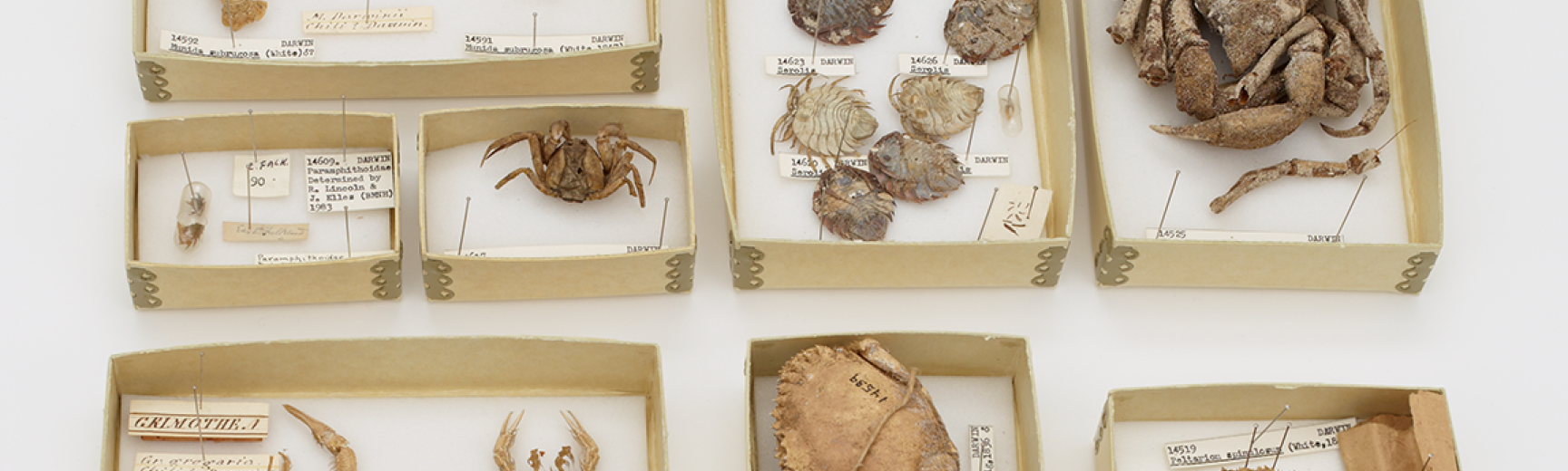 Crabs Darwin