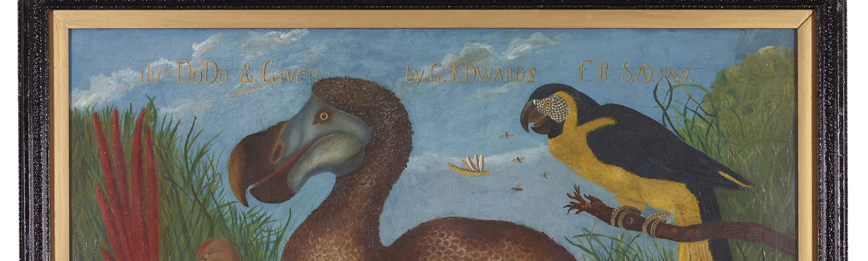 Edwards' Dodo