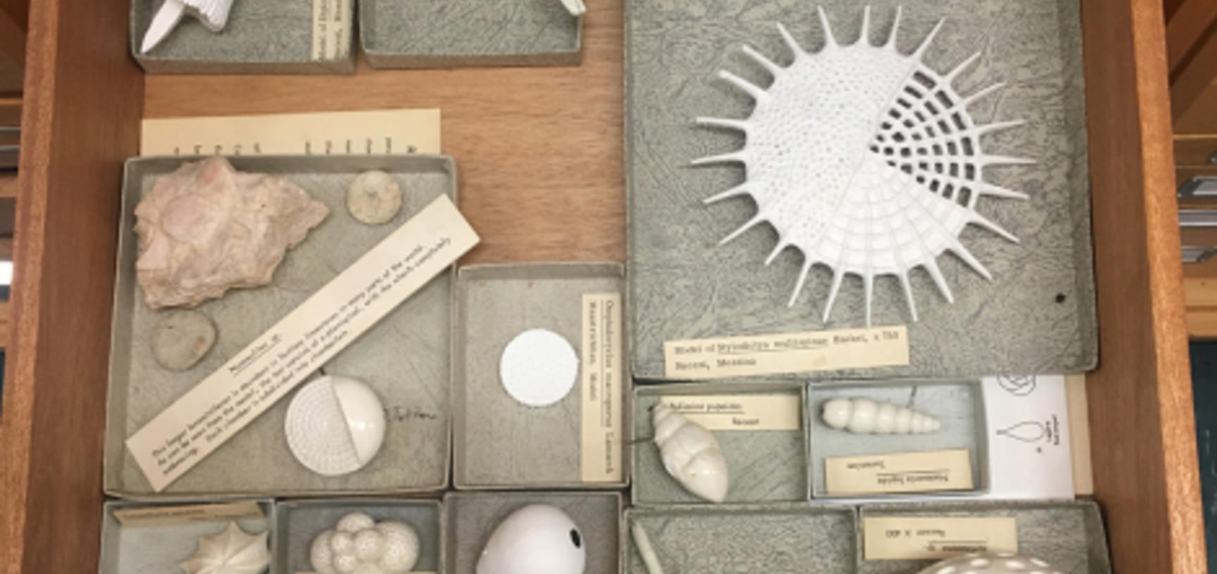 2 a selection of vaclav frics 1839 1916 models of radiolaria and foraminifera plaster and papier mache c oumnh