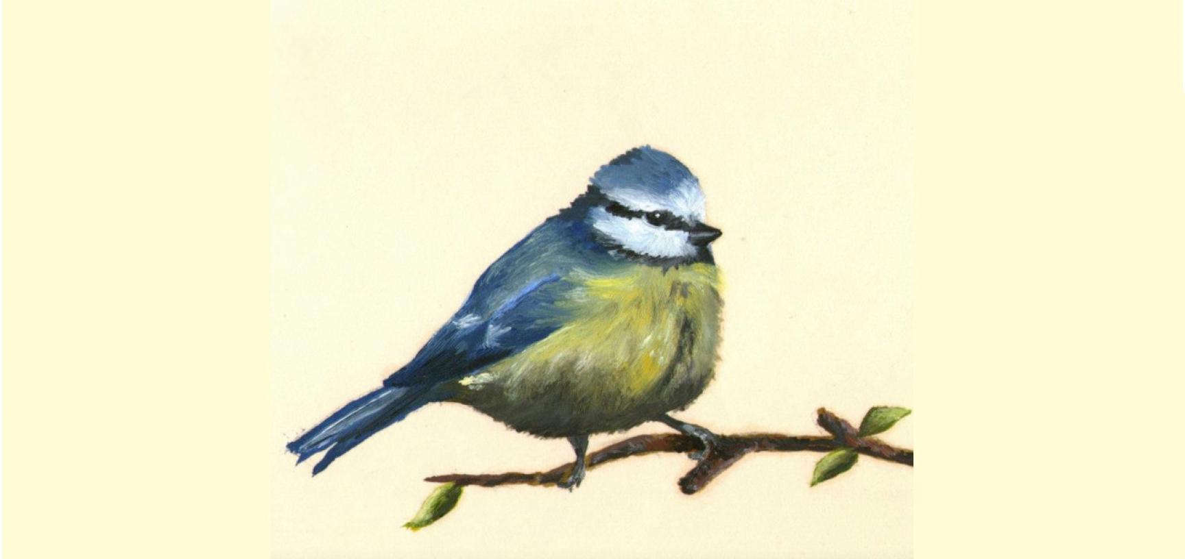 Blue tit by Jenny Hulmes