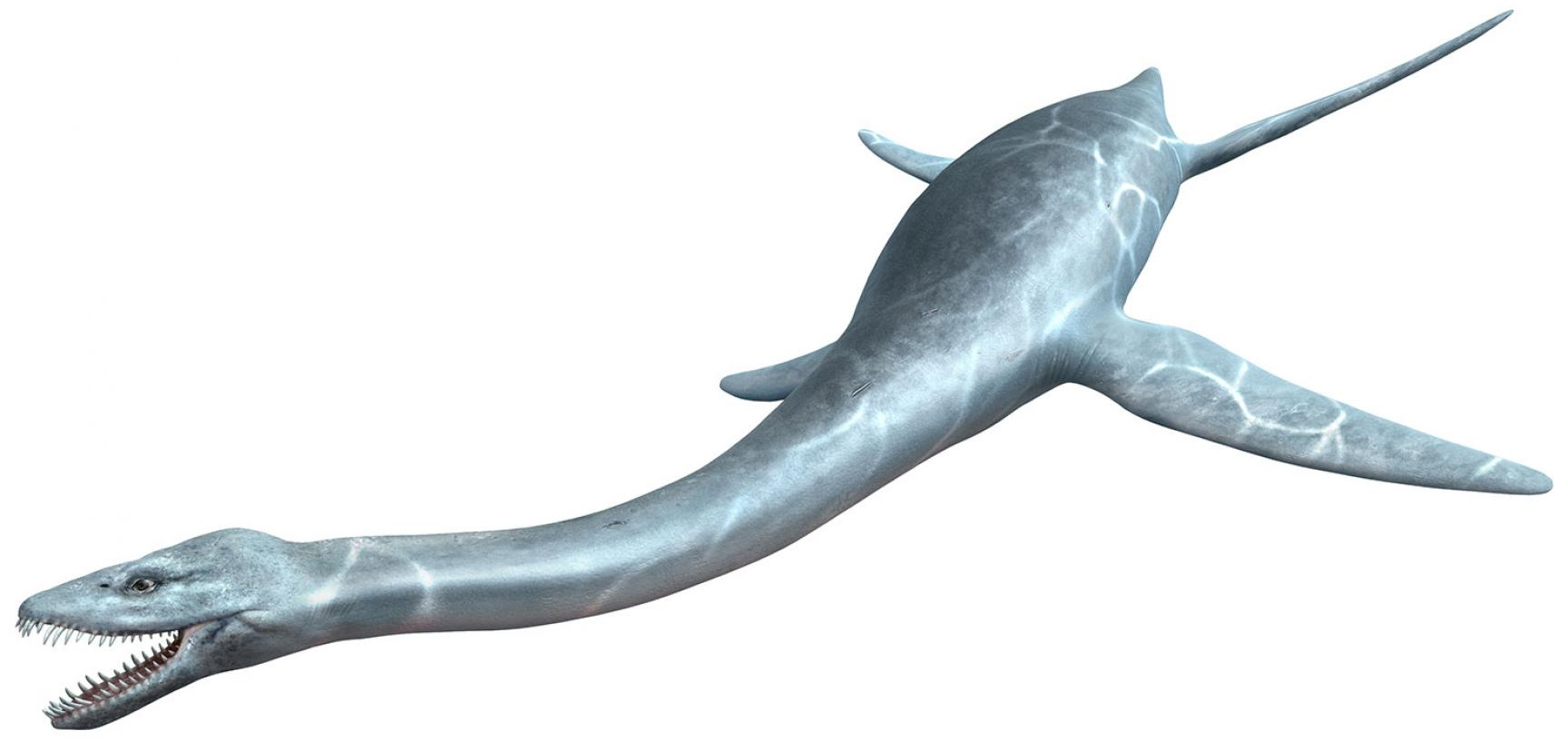 The long-necked plesiosaur on display in the Museum of Natural History in Oxford