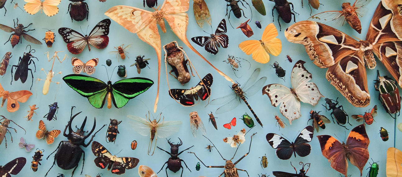insects at OUMNH