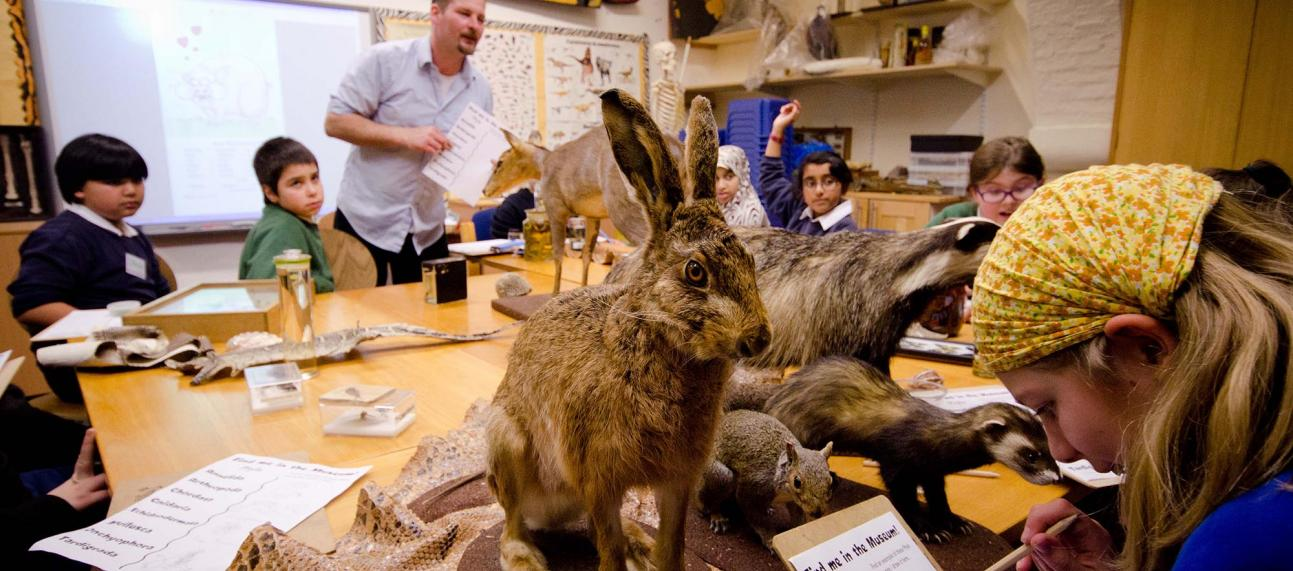 Primary school children learning about mammals