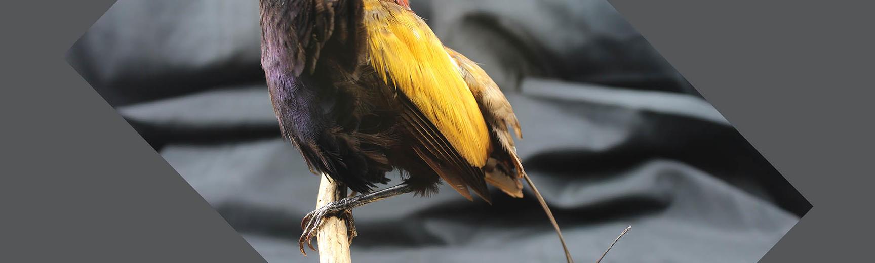birds paradise2