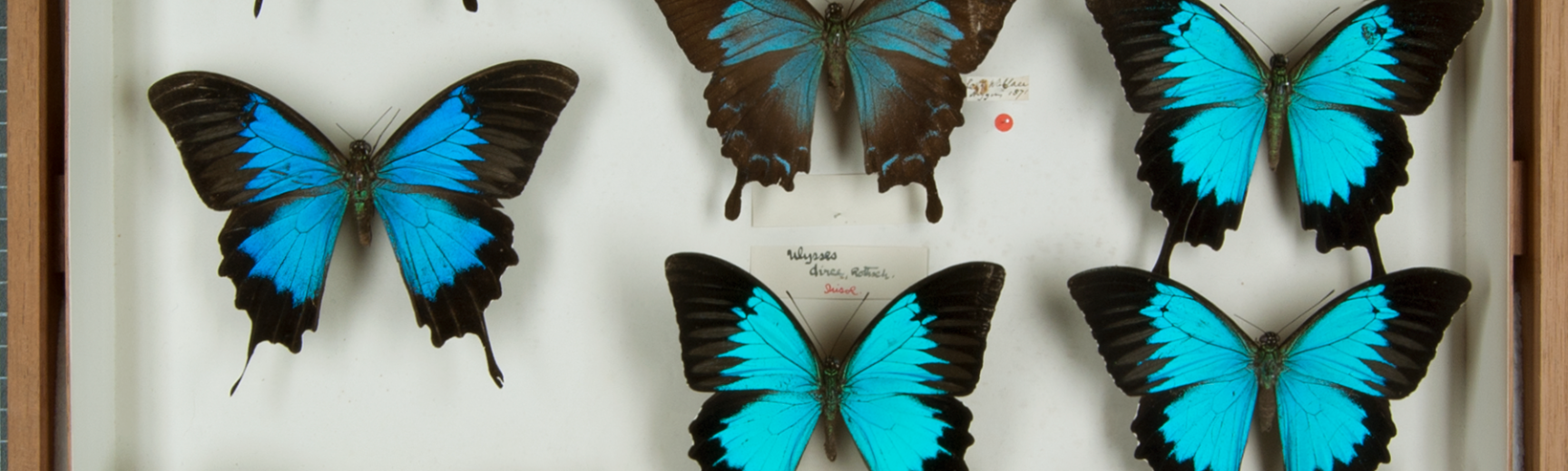 Alfred Russel Wallace collection at the Museum of Natural History