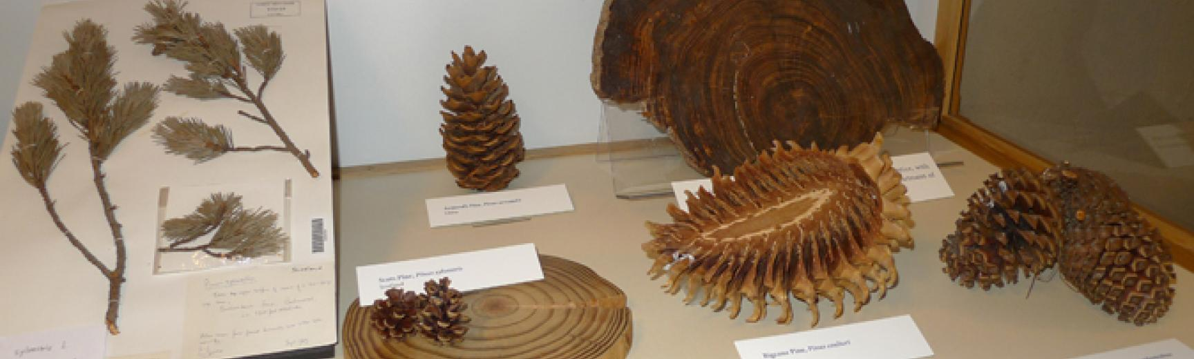 pine case