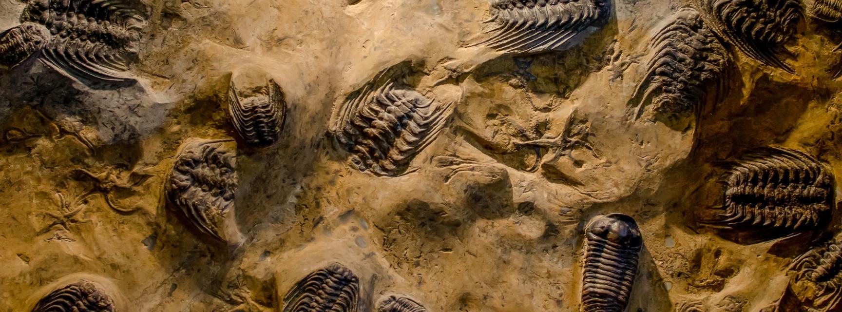 trilobites bannernew