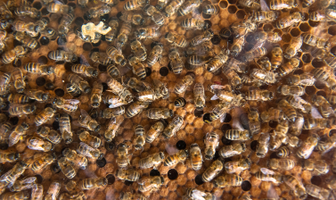 Busy bees and sealed brood chambers