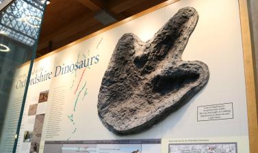 Trackway dinosaur