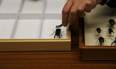 Image showing an insect from the OUMNH collection being placed in a collections case