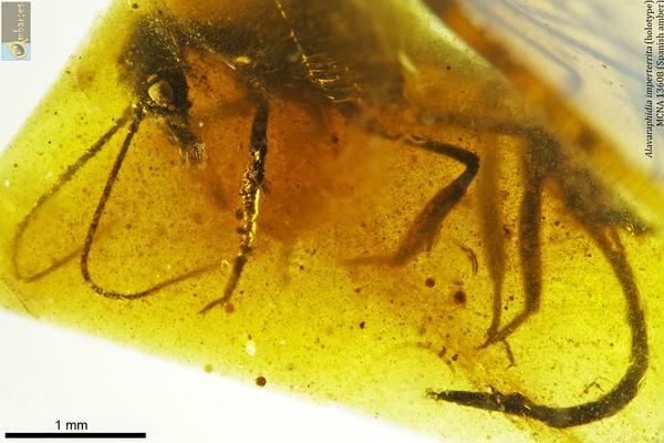fossil insect in amber resin