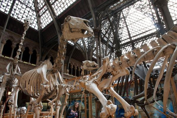 visit us oxford university museum of natural history