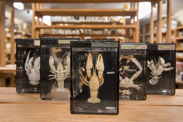 crustacean collection
