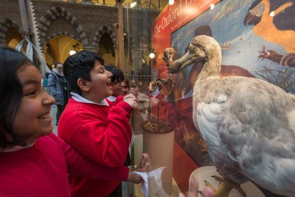 Primary school children learning about the Oxford Dodo