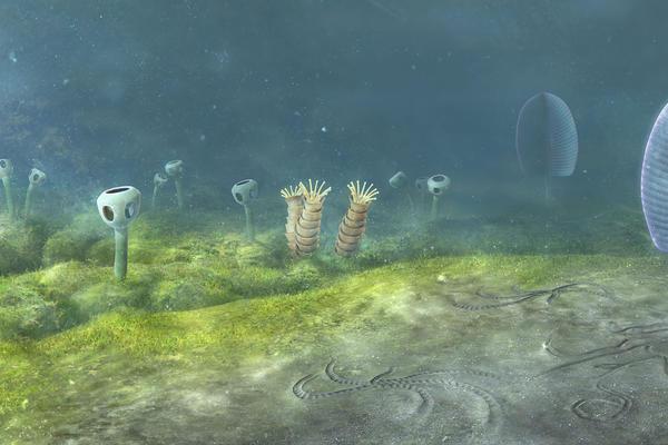 Ediacaran sea floor, Namibia, Southwest Africa - 548 million years ago