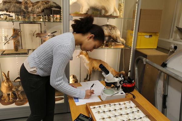 Natural History Investigators