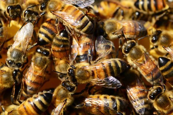 honey bees banner