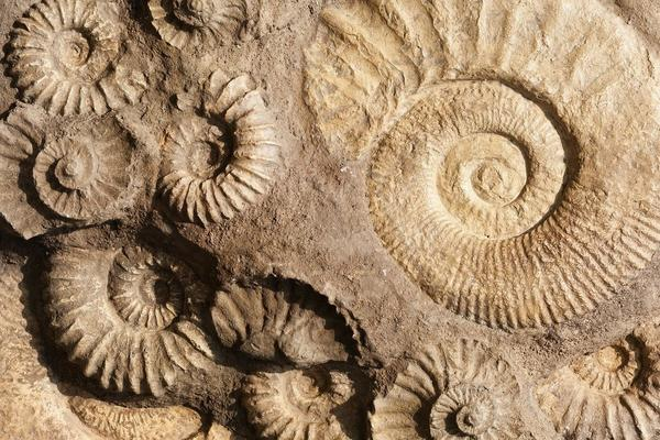 Image of fossils