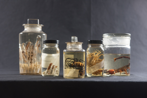 The Museum's arachnid collections