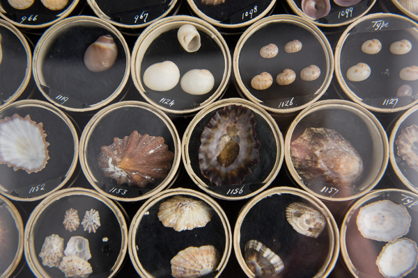 Recent mollusc collection at the Museum of Natural History