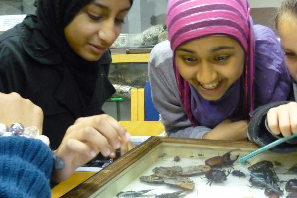 Young adults learning about butterflies