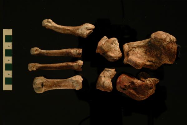 red lady bones
