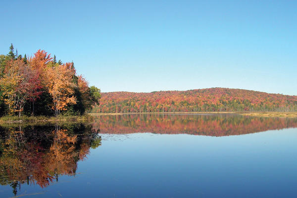 picture of lake and trees