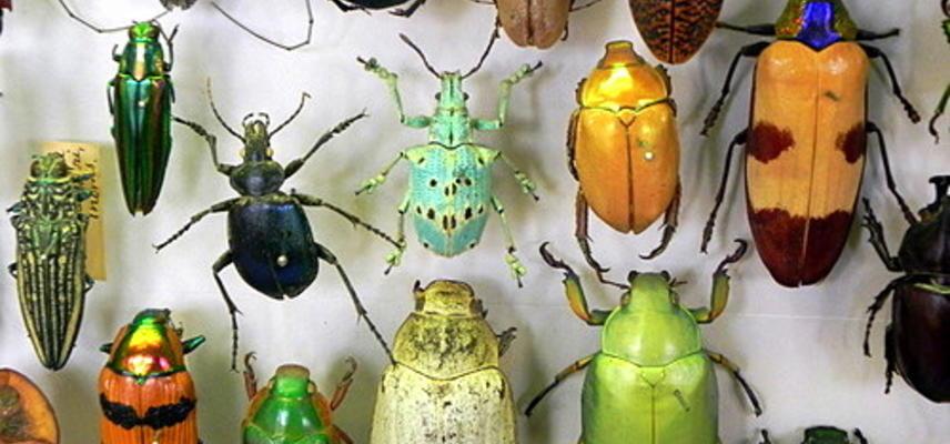 beetle specimens pic