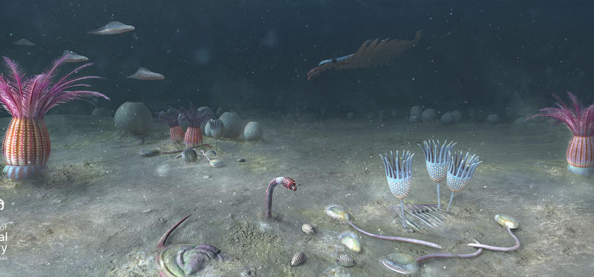 Cambrian sea floor, Yunnan Province, China - 518 million years ago.