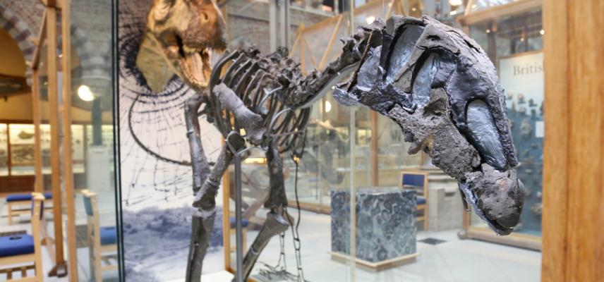 Dinosaur Oxfordshire Eustreptospondylus