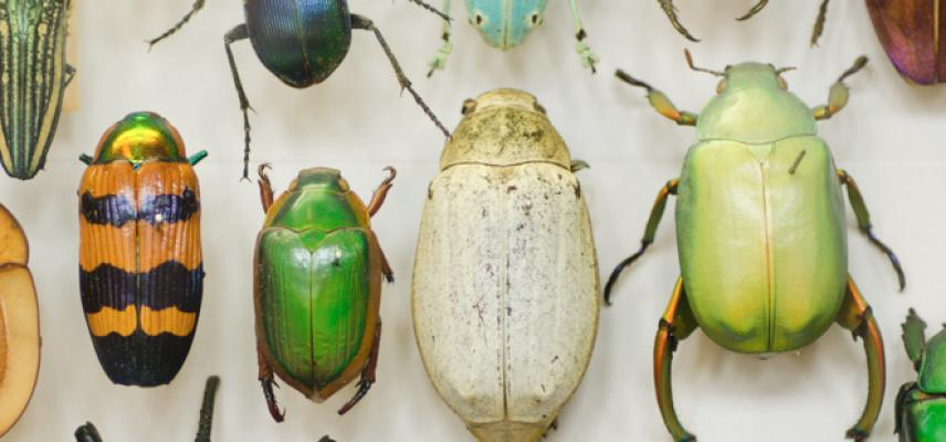 Insect collection at the Museum of Natural History