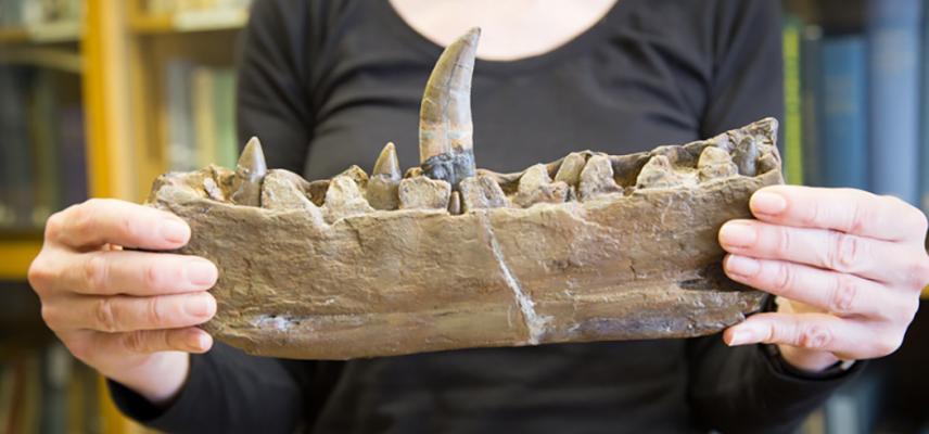 eliza jaw megalosaurus