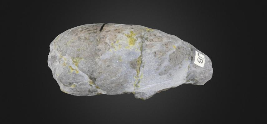 image of coprolite