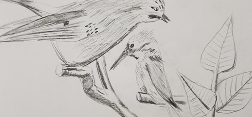 rsdrawing of a jay and a kingfisher at the museum