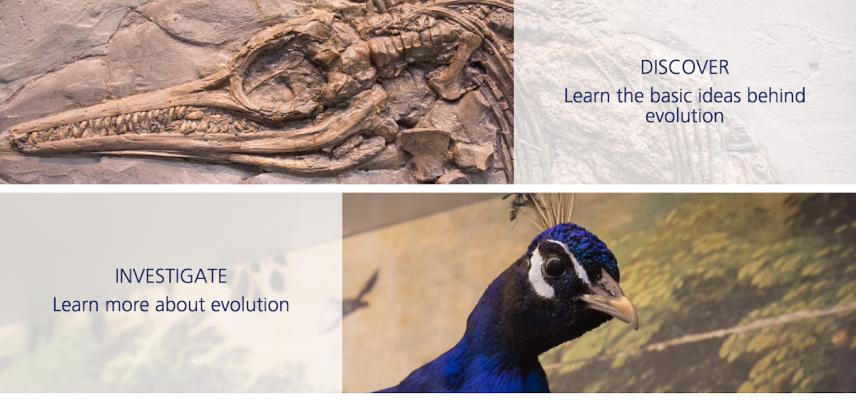 sensing evolution