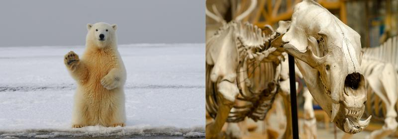 polar bear images