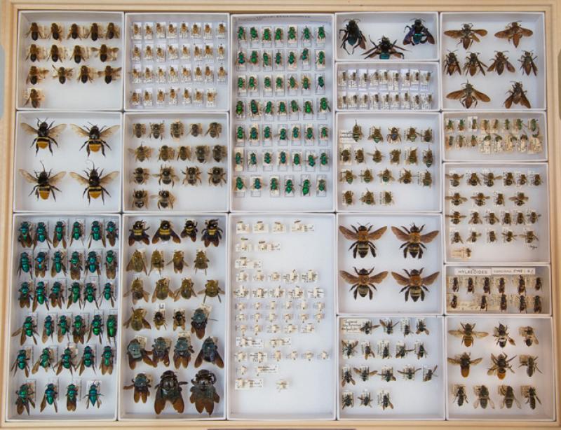 bee specimens