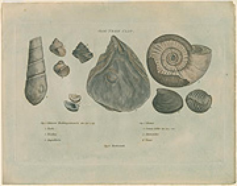 smith fossils