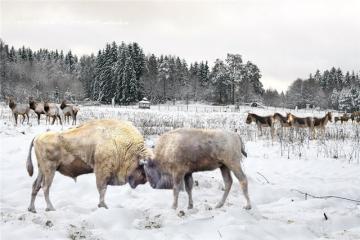 Siberian steppe