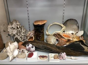 Humpback whale baleen (centre), surrounded by other ocean specimens