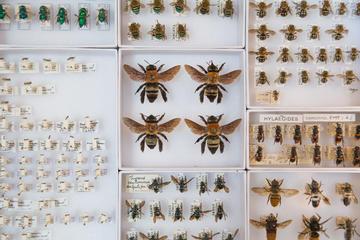 photo of bee specimens